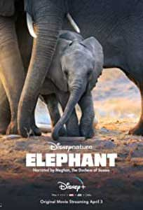 Elephant (2020) Documentar Online Subtitrat in Romana