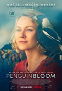 Penguin Bloom (2020) Film Online Subtitrat in Romana
